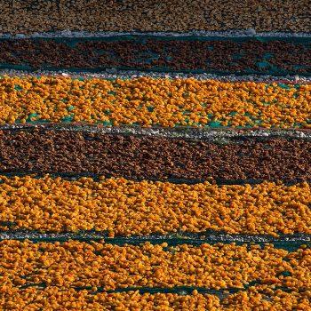 vesta-apricots-galley-06