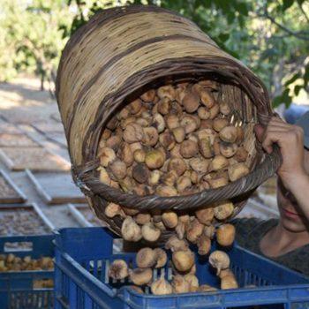 vesta-dried-figs-gallery-03