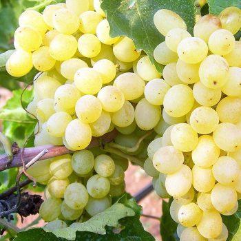 vesta-sultanas-raisins-galler-05
