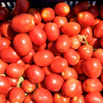 vesta-tomato-gallery-01